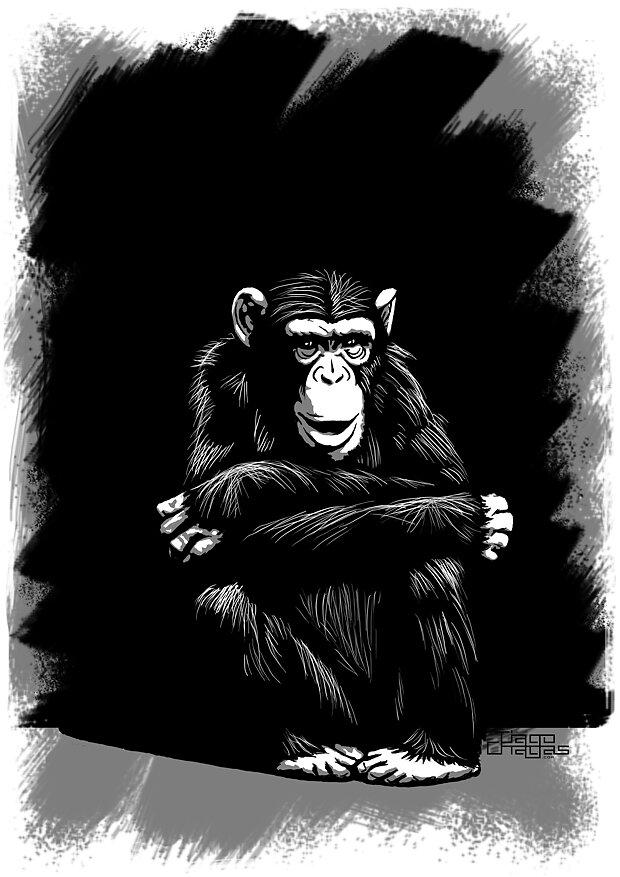 seated-chimp.jpg